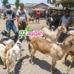 Desa Wisata Peternakan Kambing dan Domba di Purwakarta