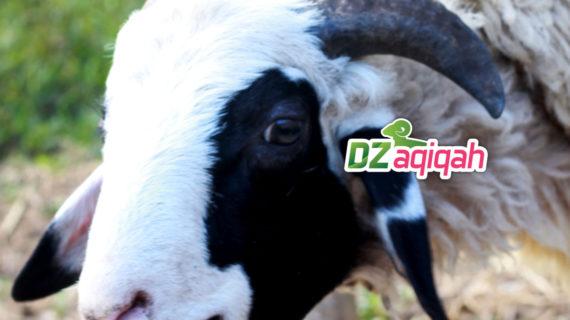 Harga Sapi dan Domba Kurban Tahun Ini di Purwakarta