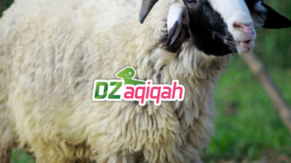 Harga Kurban Sapi dan Domba di Purwakarta