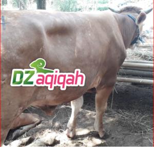Ketentuan hewan Qurban